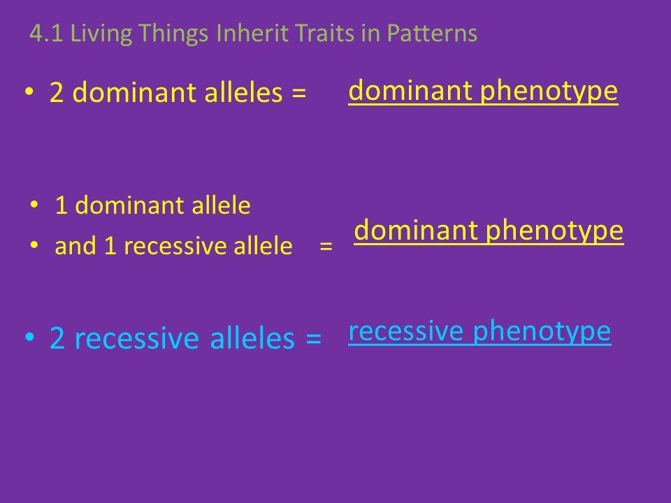 2 recessive alleles = dominant phenotype 2 dominant alleles =