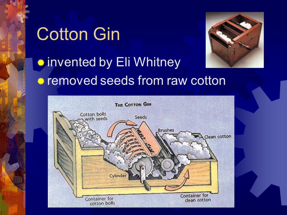 Cotton Gin invented by Eli Whitney removed seeds from raw cotton