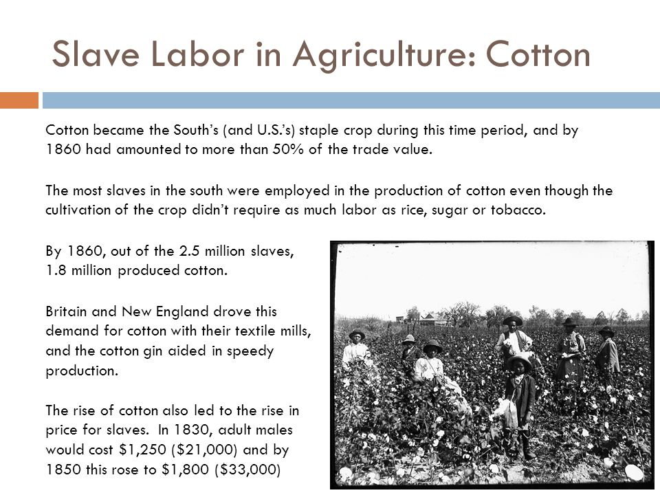 Slave Labor in Agriculture: Cotton