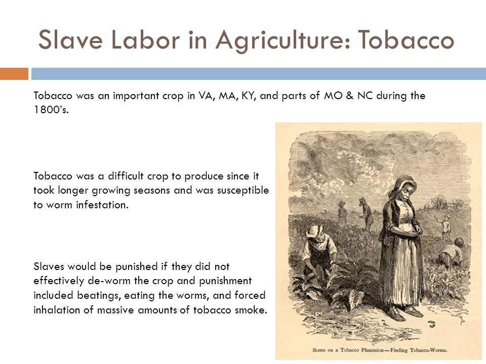 Slave Labor in Agriculture: Tobacco
