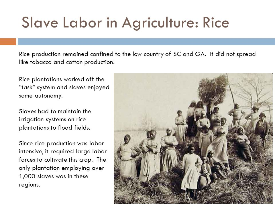 Slave Labor in Agriculture: Rice