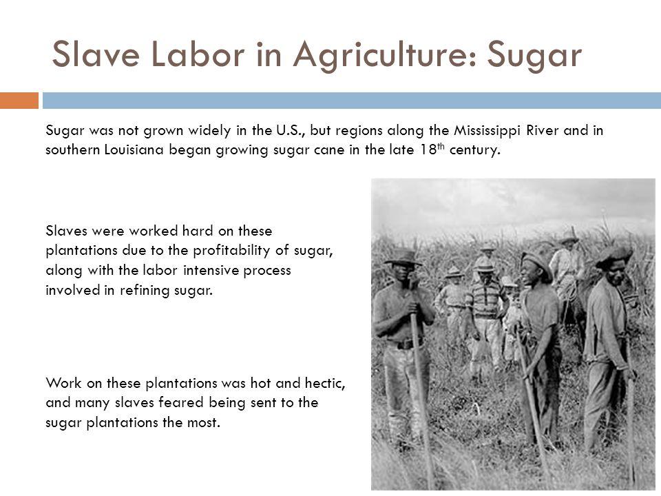 Slave Labor in Agriculture: Sugar