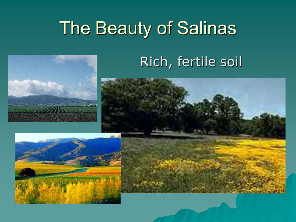 The Beauty of Salinas Rich, fertile soil