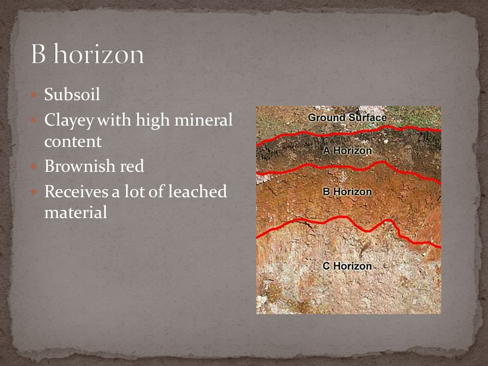 B horizon Subsoil Clayey with high mineral content Brownish red