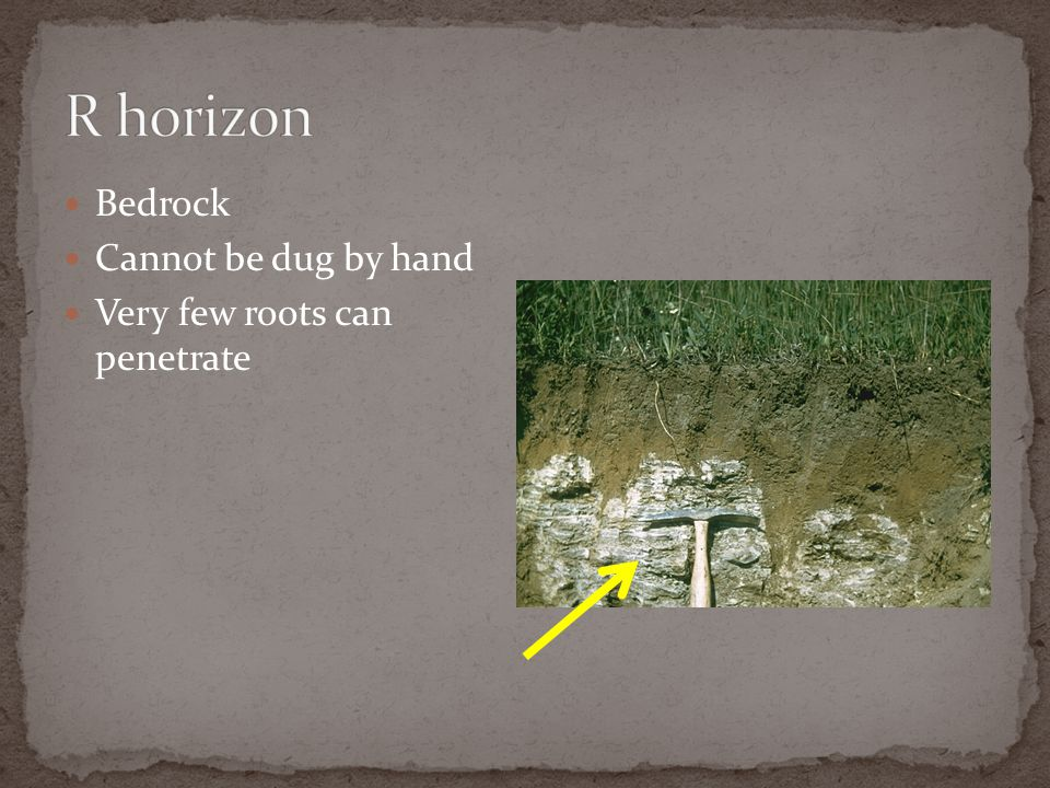 R horizon Bedrock Cannot be dug by hand Very few roots can penetrate