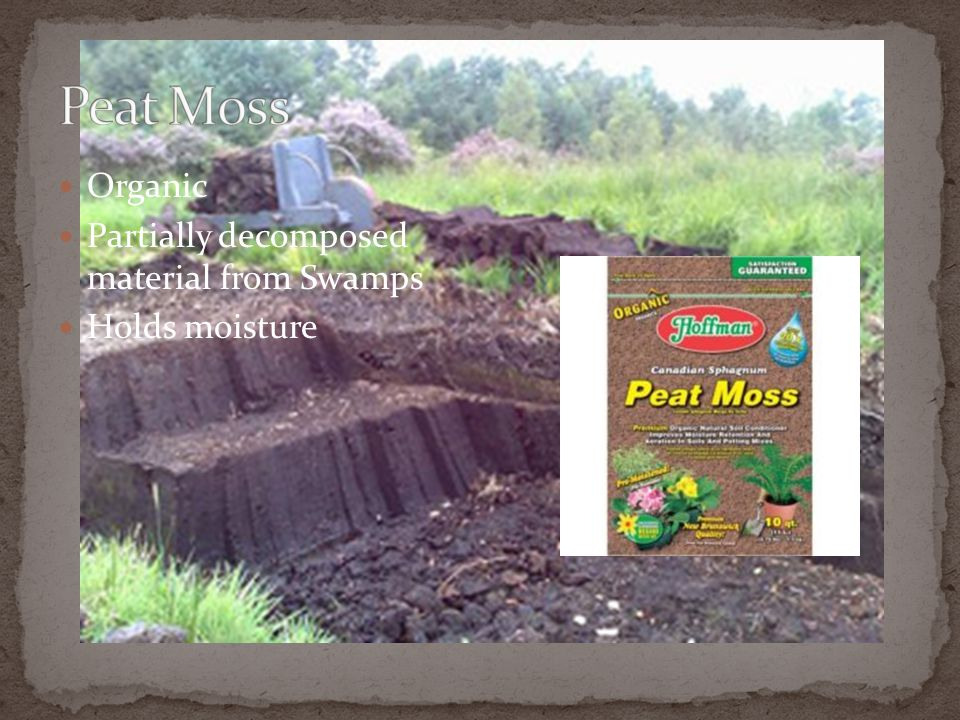Peat Moss Organic Partially decomposed material from Swamps