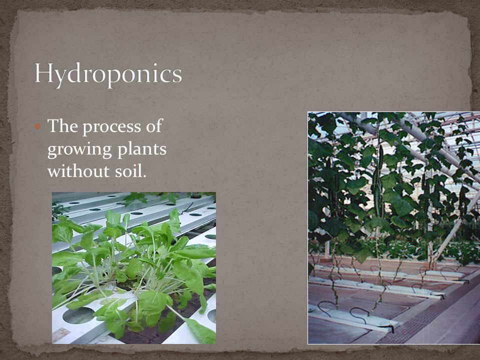 Hydroponics The process of growing plants without soil.