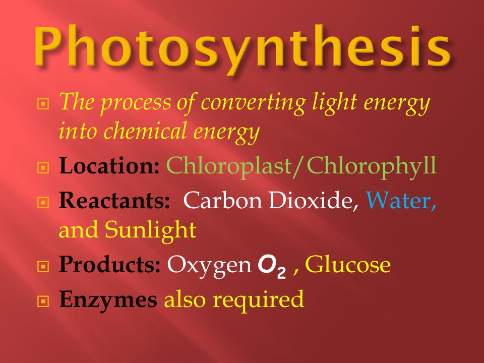 Photosynthesis The process of converting light energy into chemical energy. Location: Chloroplast/Chlorophyll.