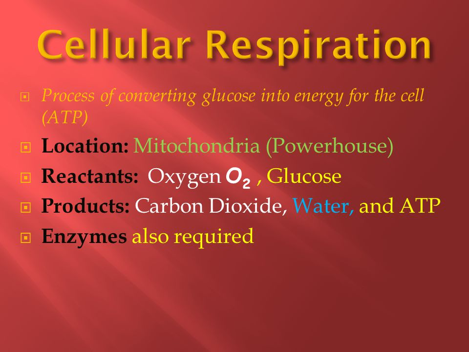 Cellular Respiration Location: Mitochondria (Powerhouse)