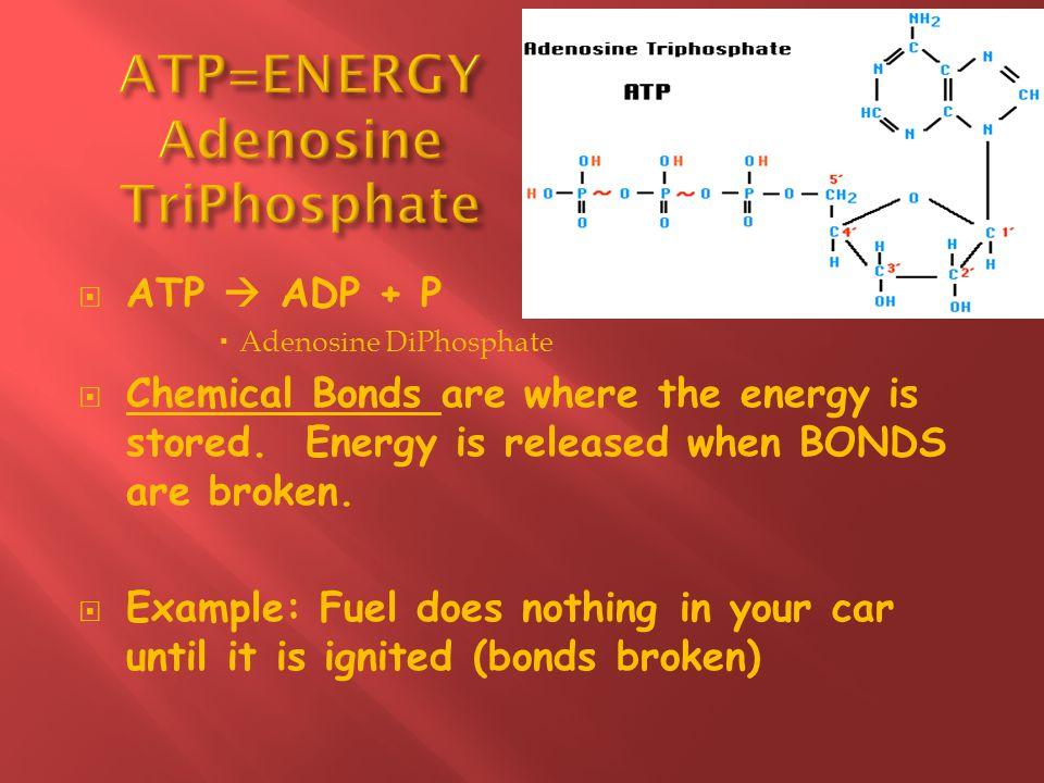 ATP=ENERGY Adenosine TriPhosphate
