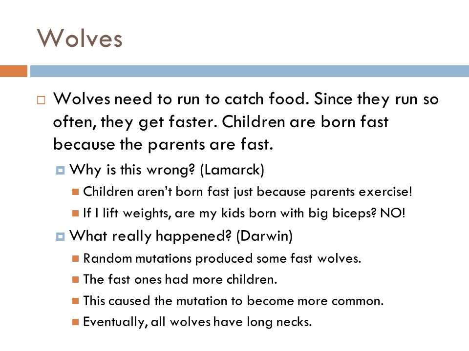 Wolves Wolves need to run to catch food. Since they run so often, they get faster. Children are born fast because the parents are fast.