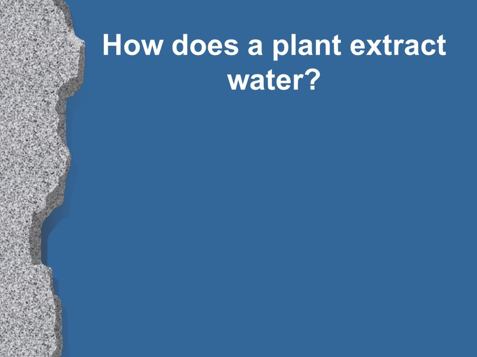 How does a plant extract water