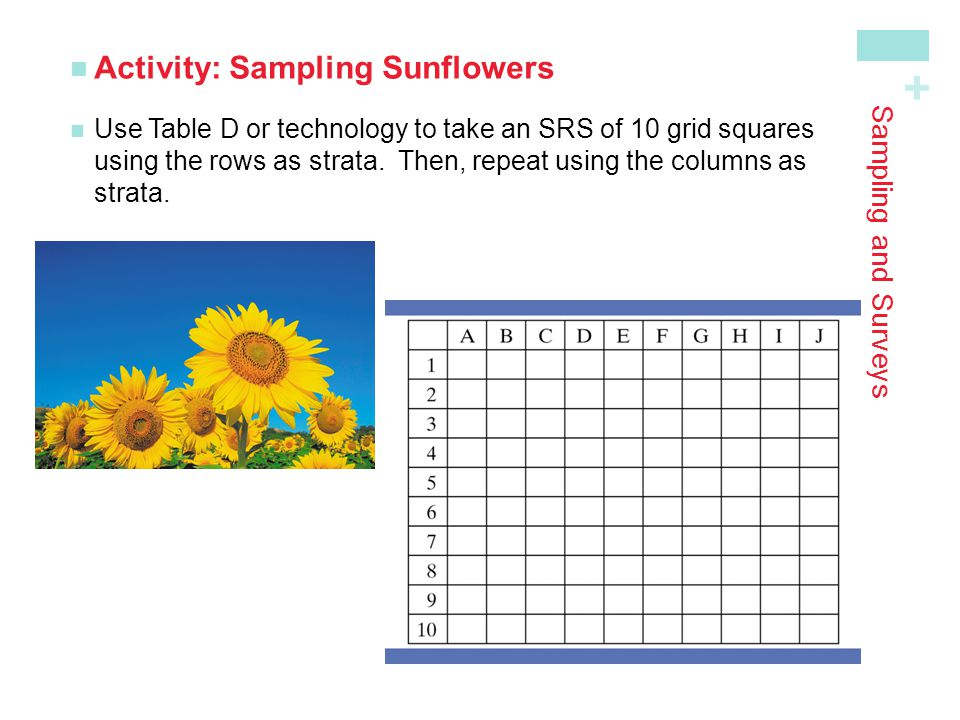 Activity: Sampling Sunflowers