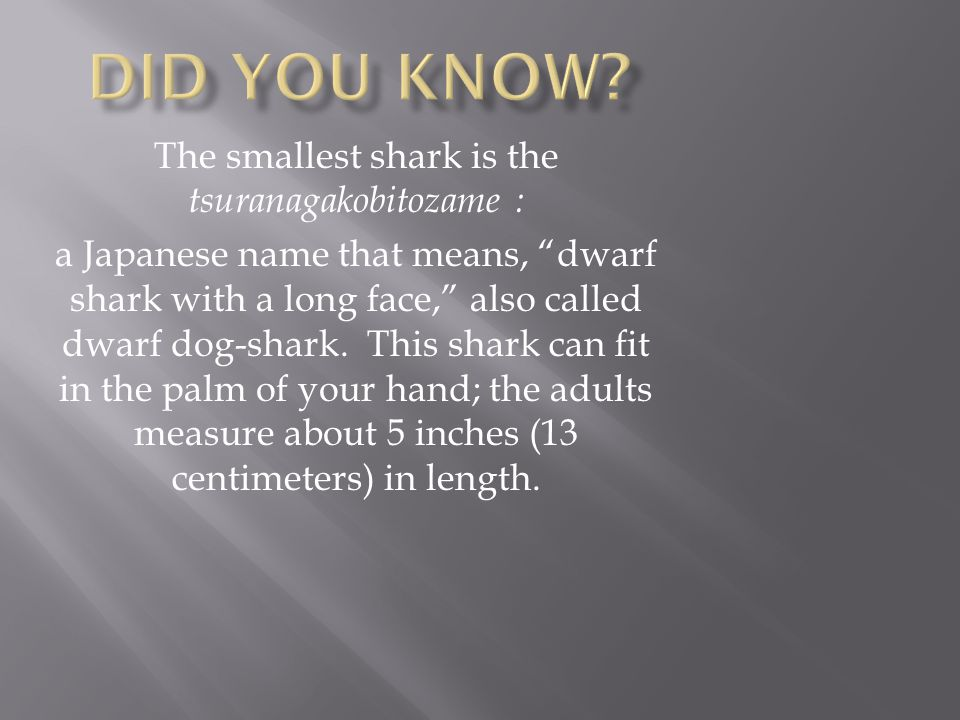 The smallest shark is the tsuranagakobitozame :