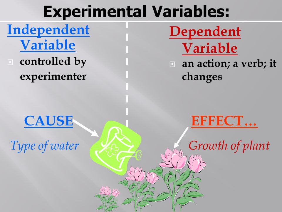 Experimental Variables: