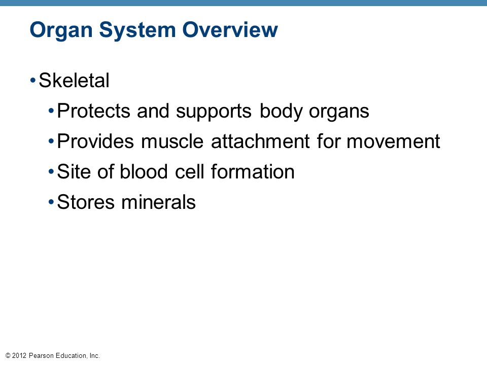 Organ System Overview Skeletal Protects and supports body organs
