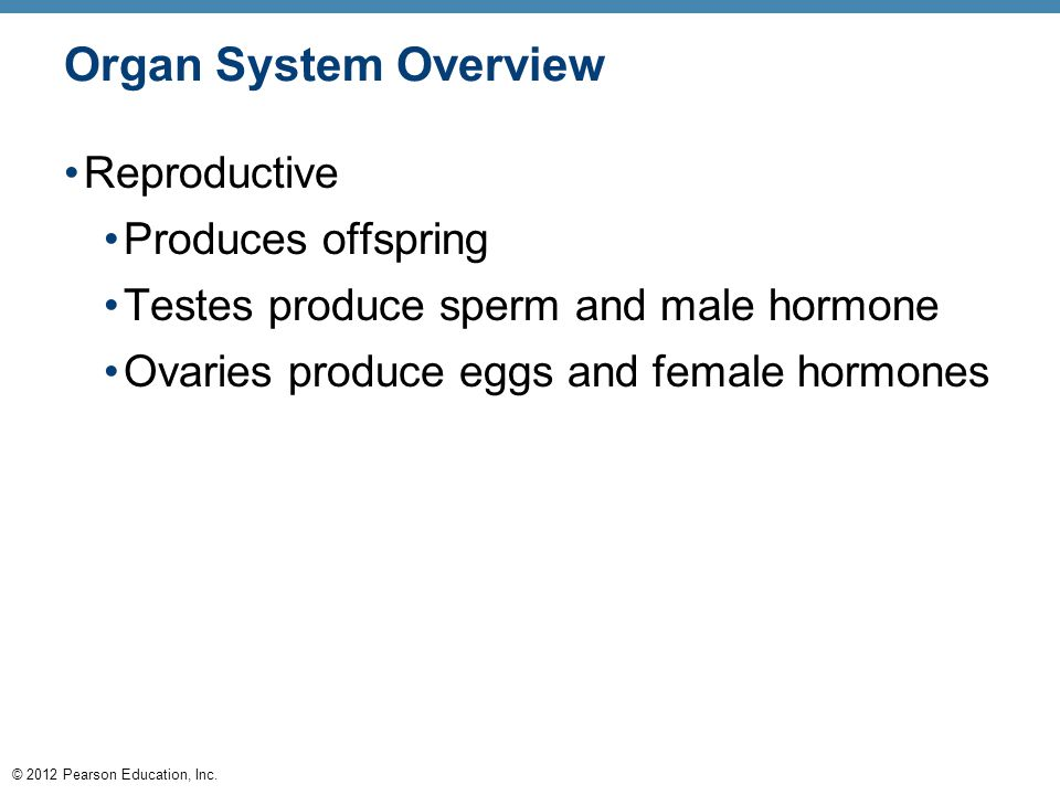 Organ System Overview Reproductive Produces offspring