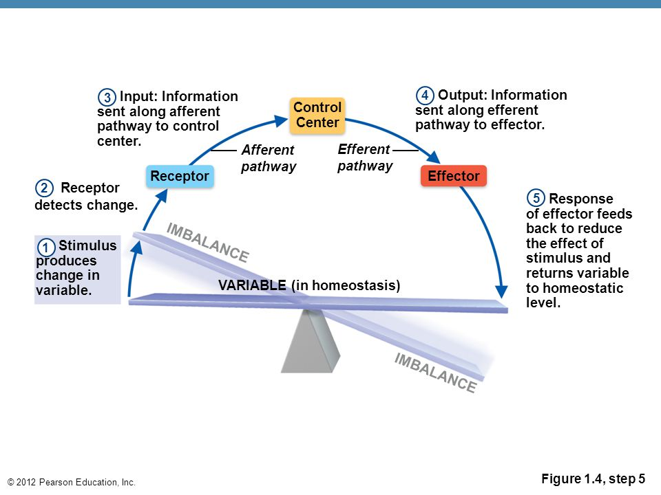 VARIABLE (in homeostasis)