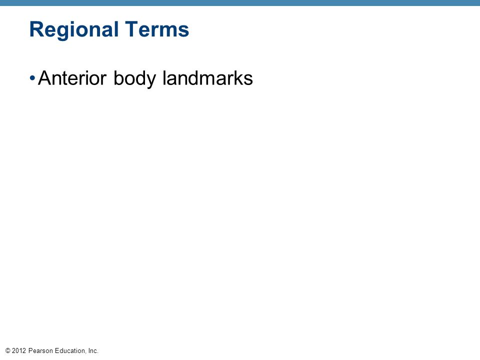 Regional Terms Anterior body landmarks