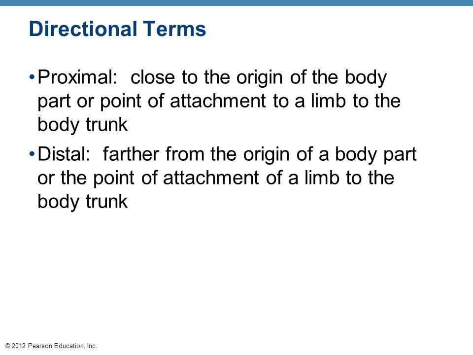 Directional Terms Proximal: close to the origin of the body part or point of attachment to a limb to the body trunk.