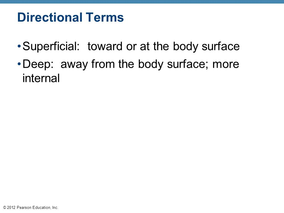 Directional Terms Superficial: toward or at the body surface