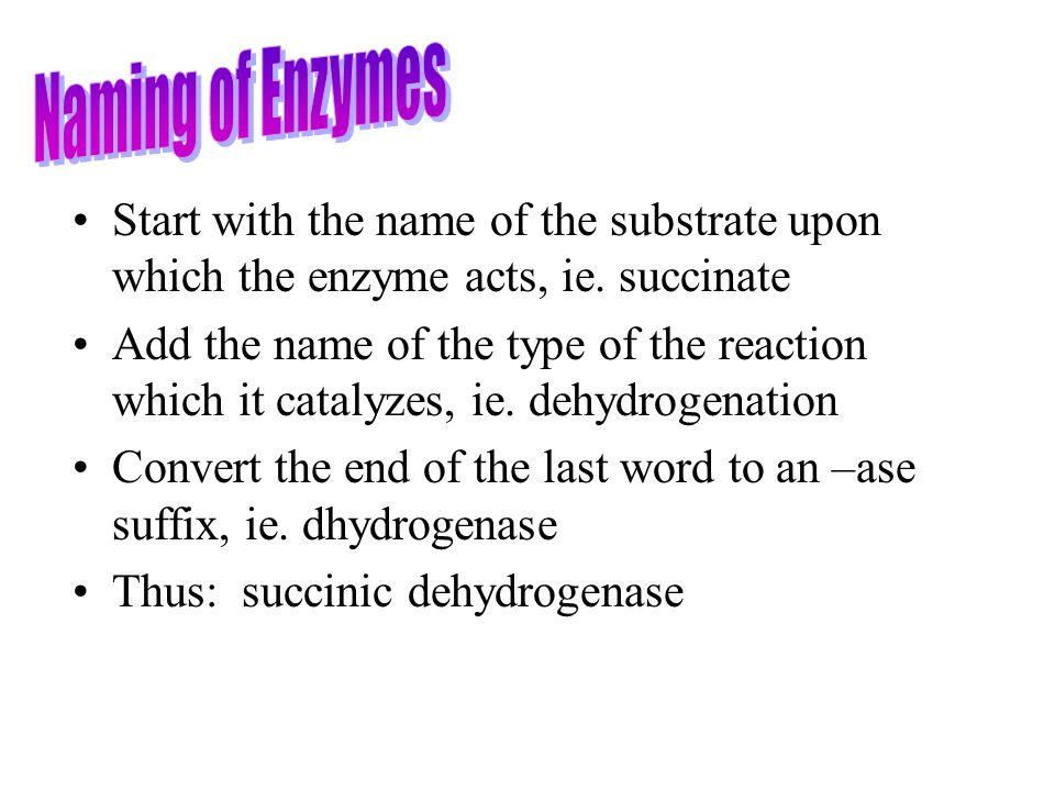 Naming of Enzymes Start with the name of the substrate upon which the enzyme acts, ie. succinate.