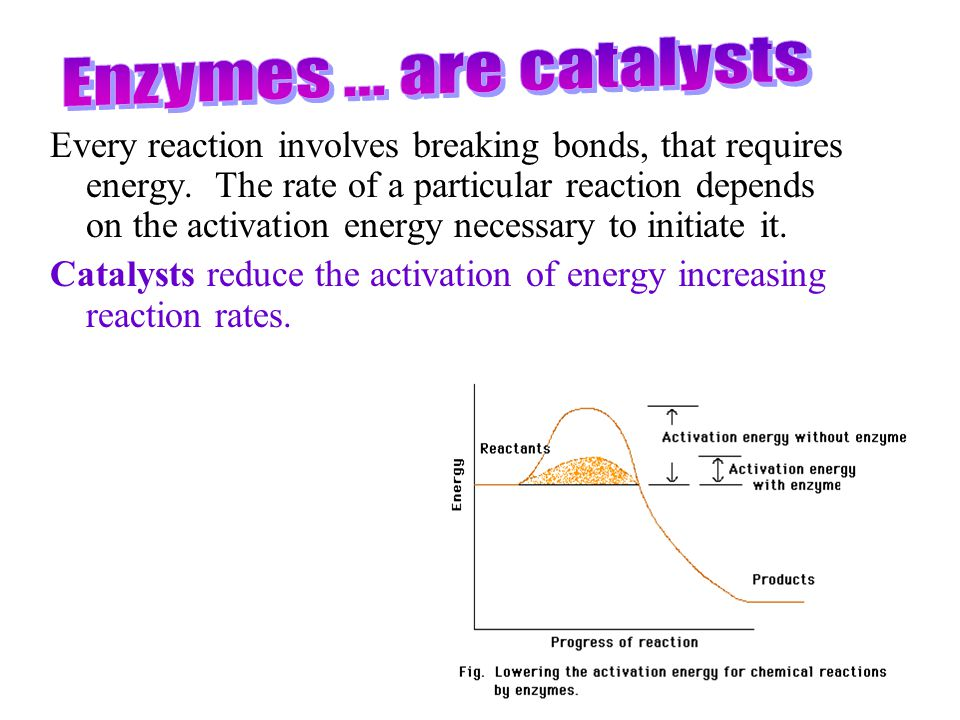Enzymes ... are catalysts