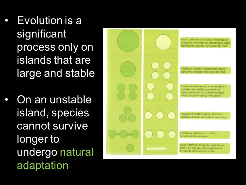 Evolution is a significant process only on islands that are large and stable