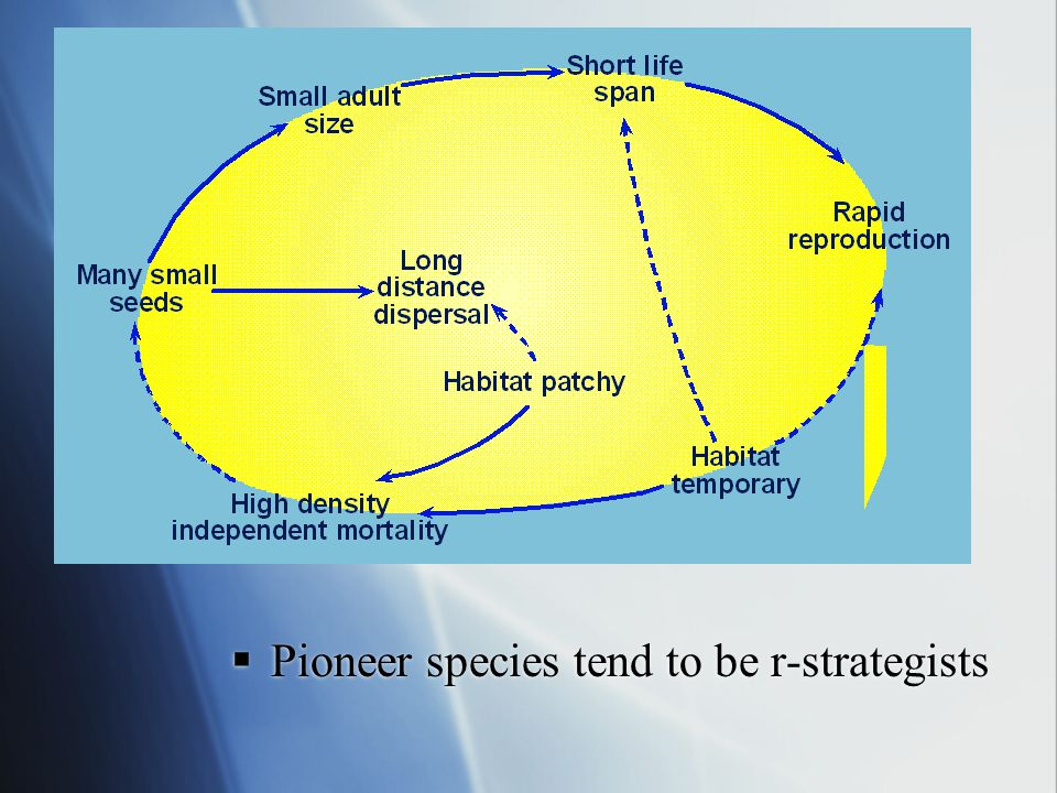 Pioneer species tend to be r-strategists