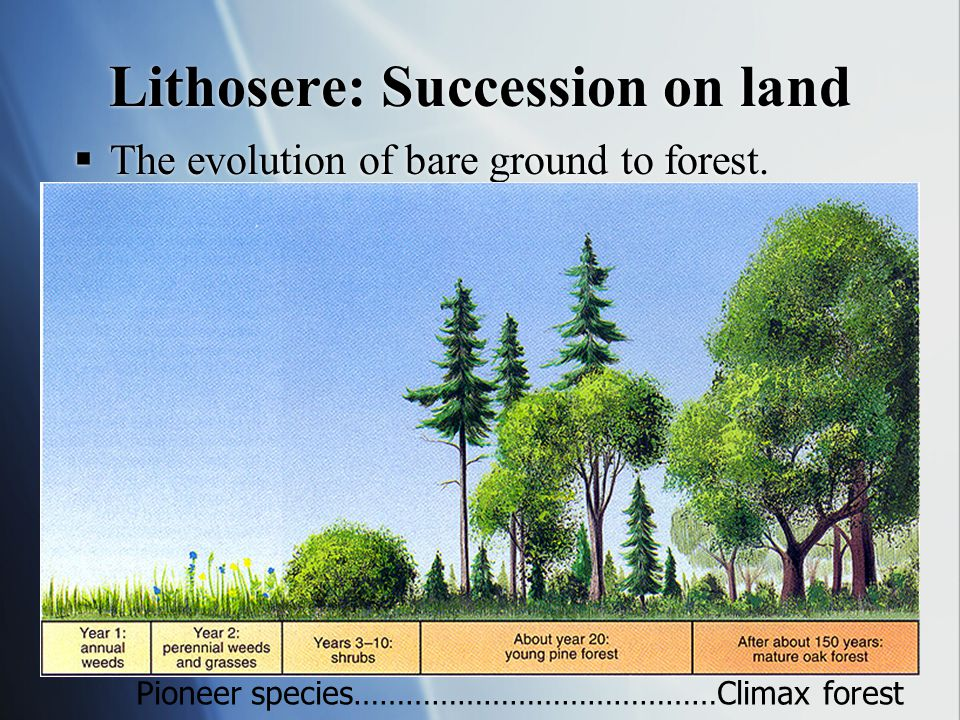 Lithosere: Succession on land