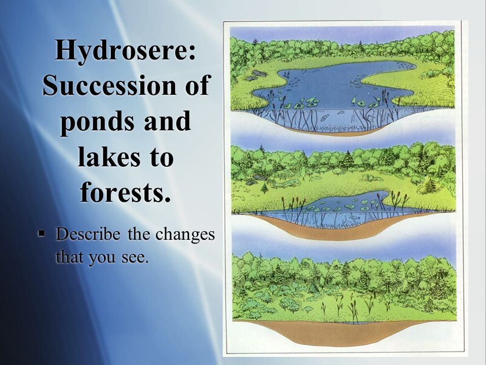 Hydrosere: Succession of ponds and lakes to forests.