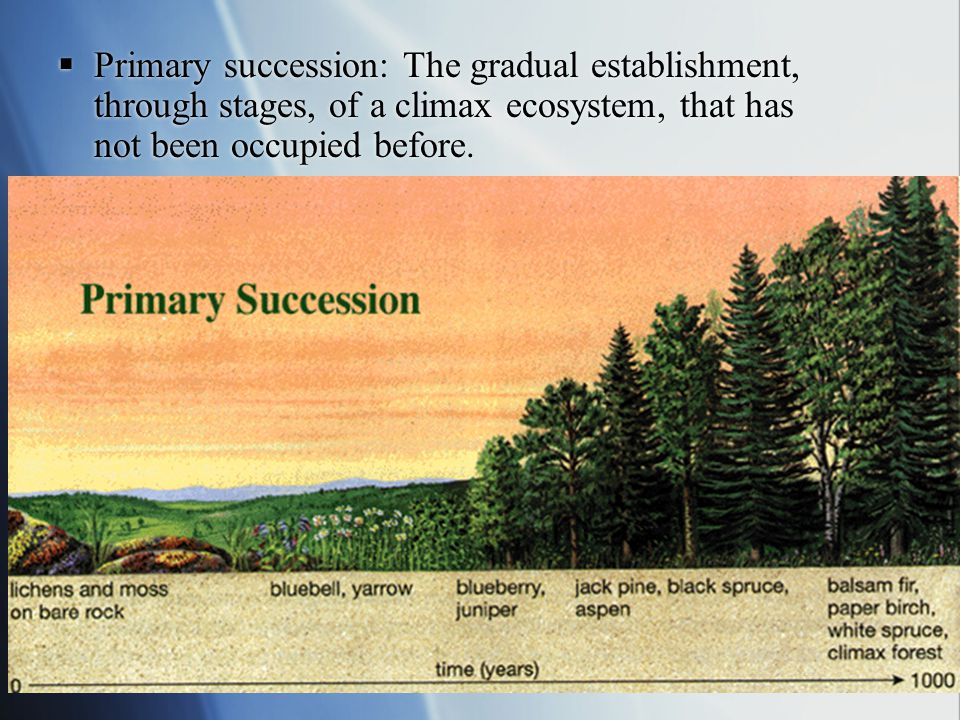 Primary succession: The gradual establishment, through stages, of a climax ecosystem, that has not been occupied before.