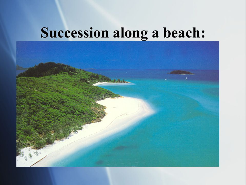 Succession along a beach: