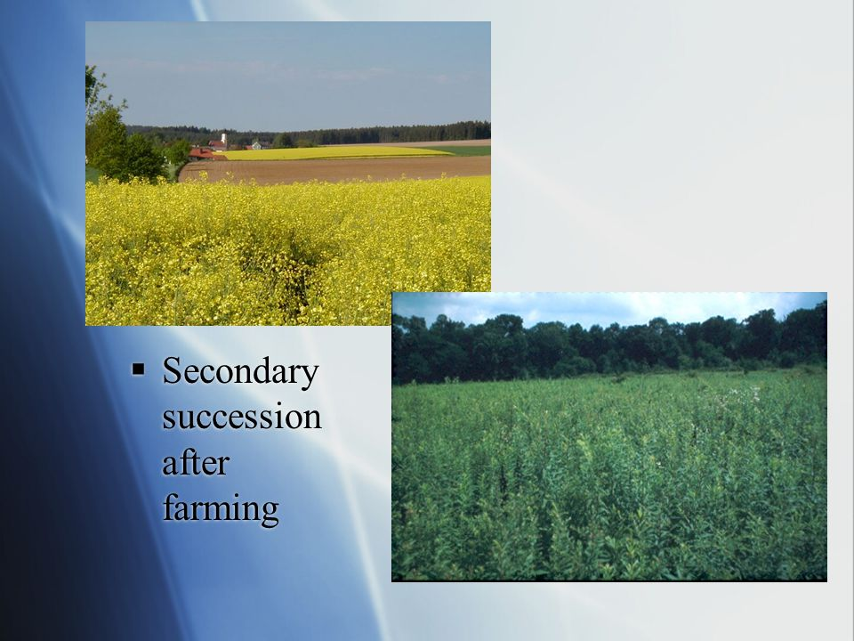 Secondary succession after farming