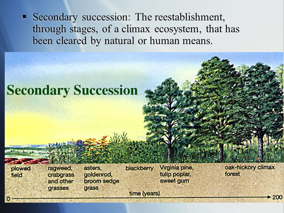 Secondary succession: The reestablishment, through stages, of a climax ecosystem, that has been cleared by natural or human means.