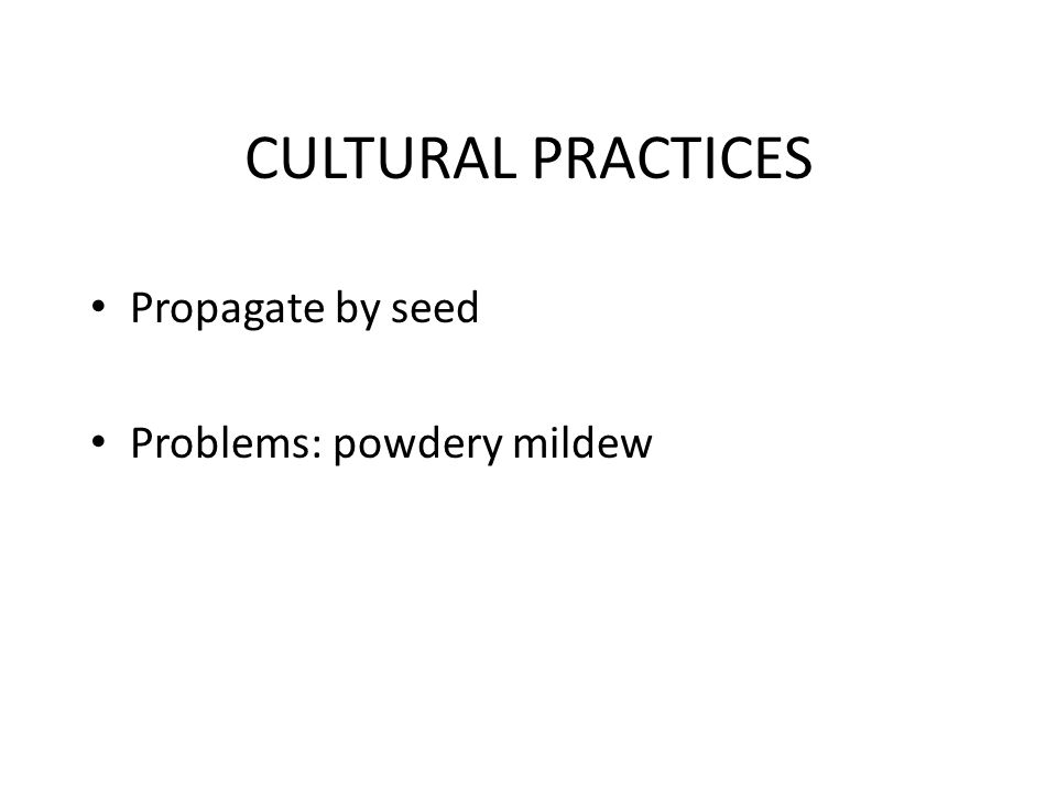 CULTURAL PRACTICES Propagate by seed Problems: powdery mildew