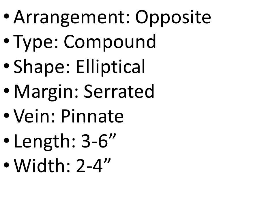 Arrangement: Opposite