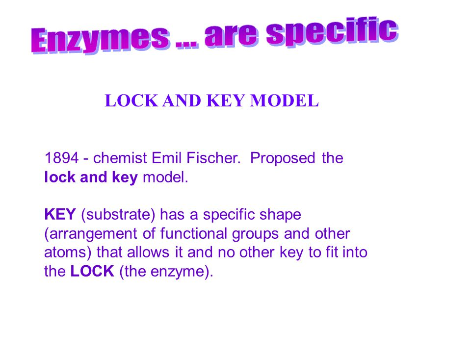 Enzymes ... are specific LOCK AND KEY MODEL