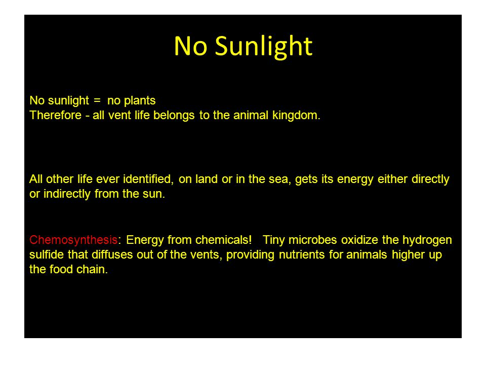 No Sunlight No sunlight = no plants