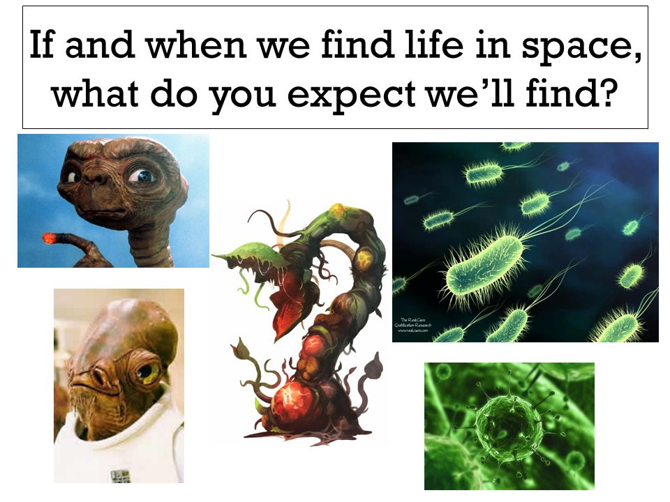 If and when we find life in space, what do you expect we'll find