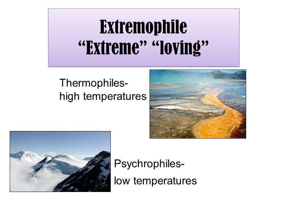 Extremophile Extreme loving