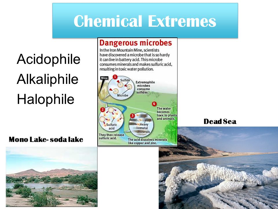 Chemical Extremes Acidophile Alkaliphile Halophile Dead Sea