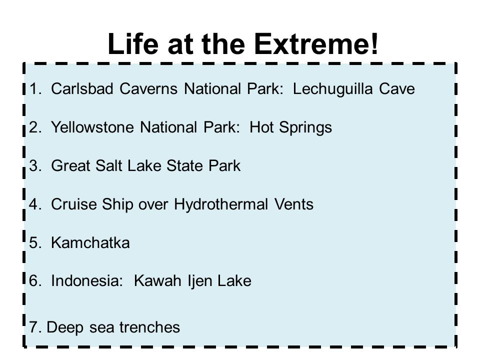 Life at the Extreme!