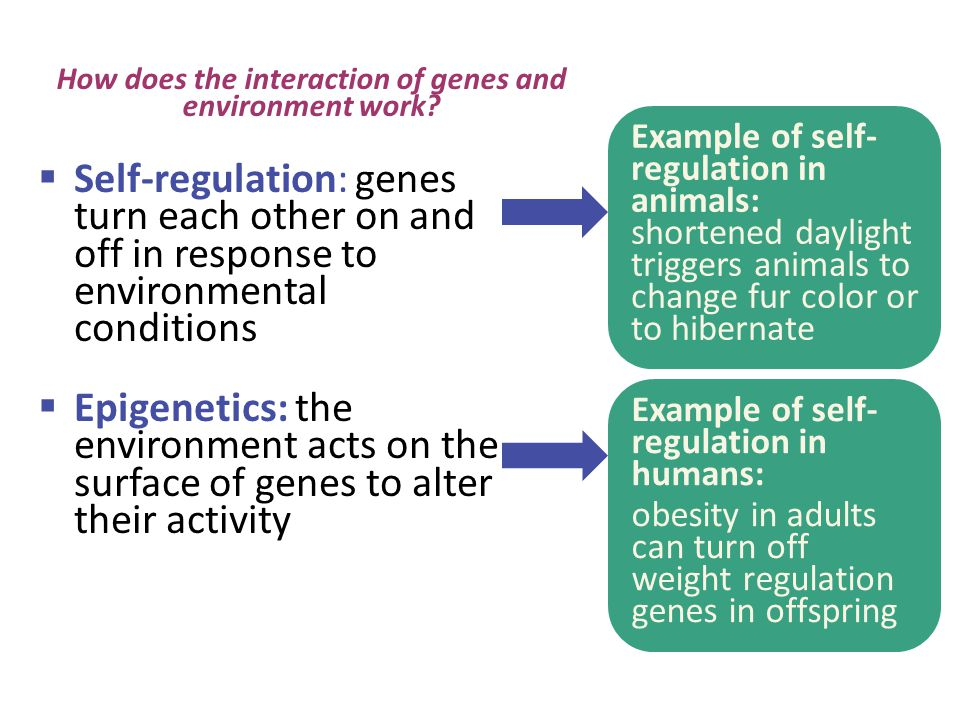 How does the interaction of genes and environment work