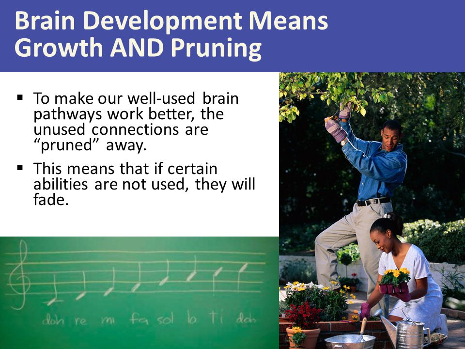 Brain Development Means Growth AND Pruning