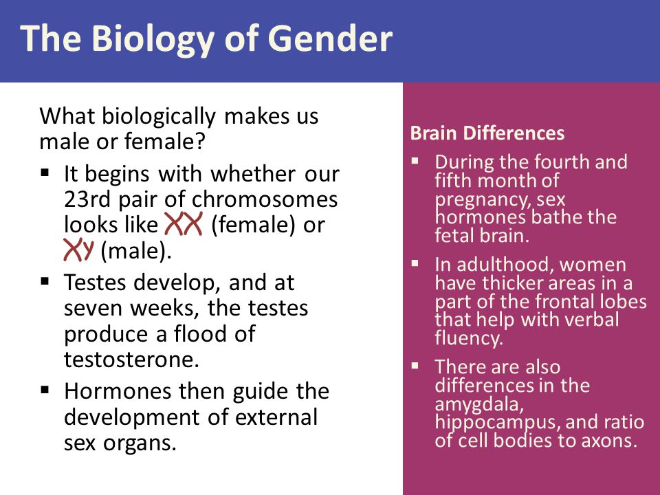The Biology of Gender What biologically makes us male or female
