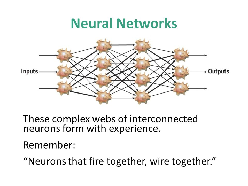 Neural Networks These complex webs of interconnected neurons form with experience. Remember: Neurons that fire together, wire together.