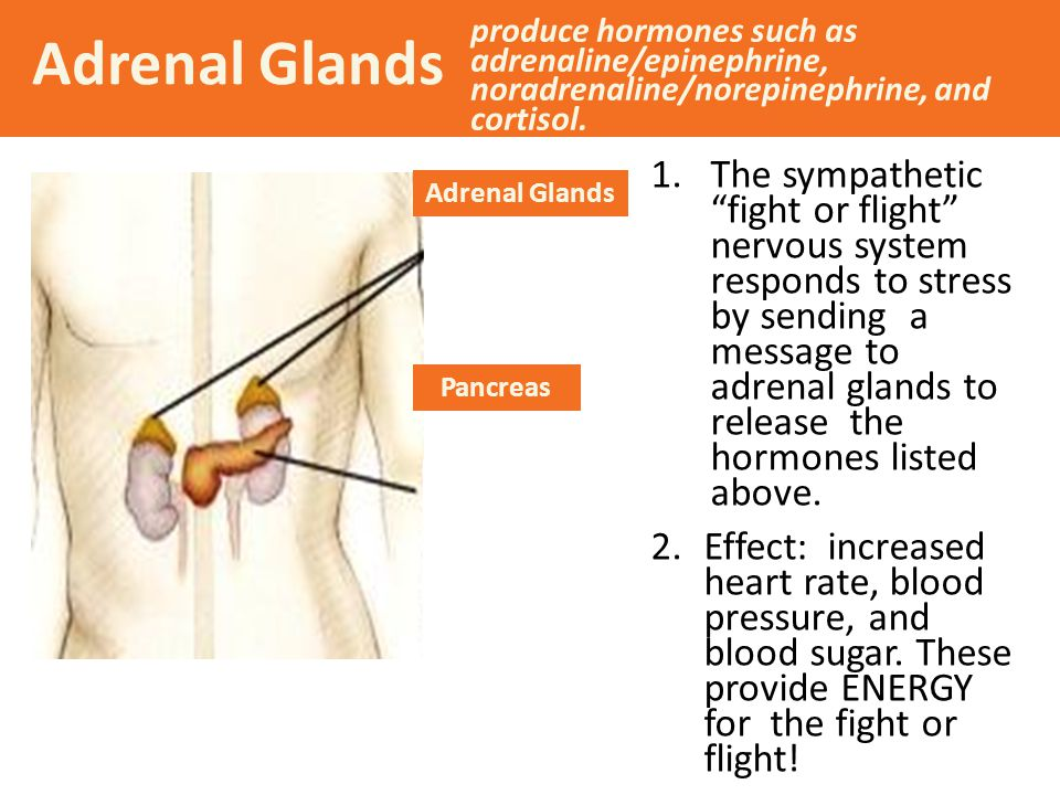 Adrenal Glands produce hormones such as adrenaline/epinephrine, noradrenaline/norepinephrine, and cortisol.