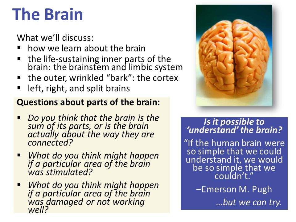 Is it possible to 'understand' the brain