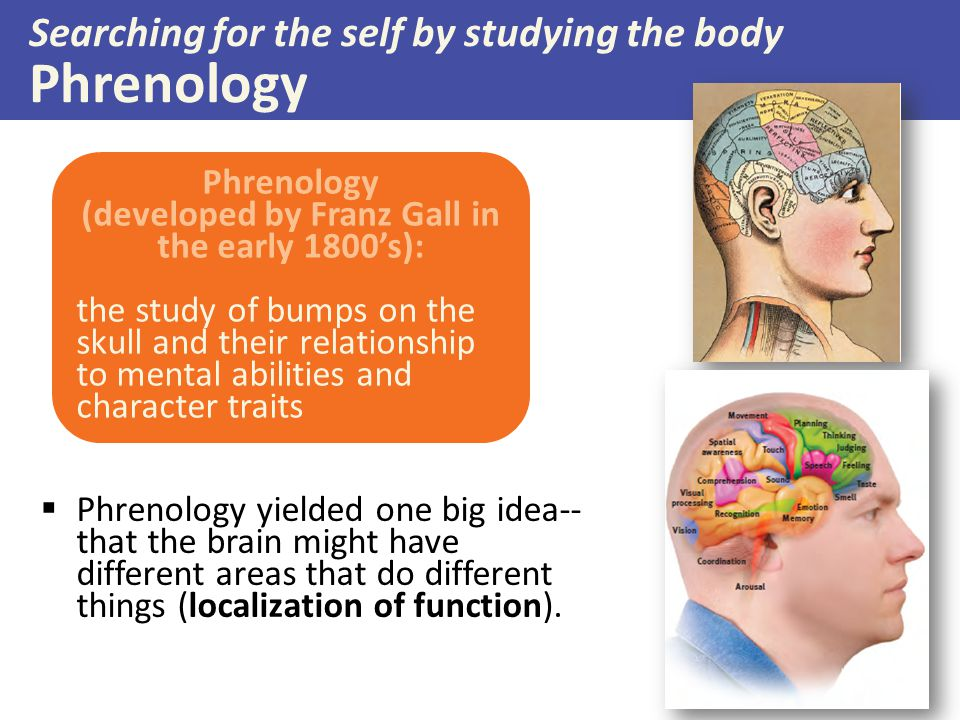 Searching for the self by studying the body Phrenology